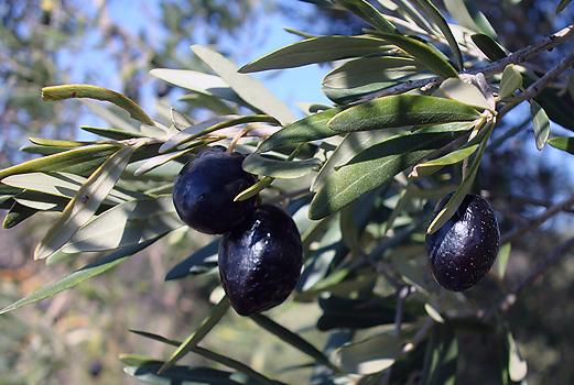 Mylopotamos здоровая пища и Cretoikos
